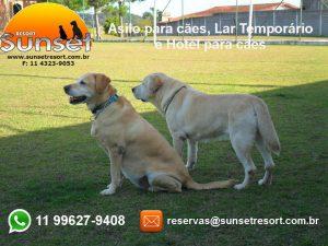 anuncio asilo para cachorros