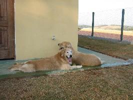 cães descansando asilo
