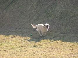 cachorro brincando abrigo