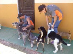 monitores brincando com cães no asilo cães