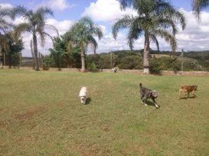 cães pequenos abrigo cachorros