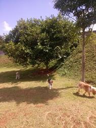 cachorros brincando hotelzinho cães