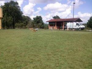 campo grande abrigo cachorros