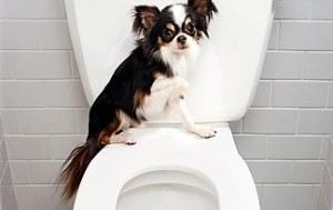 adestramento do banheiro