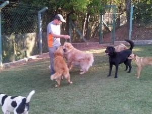 grupo de cães hotel cachorros