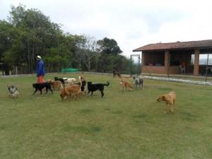hotel-cachorros-sao-paulo (1)