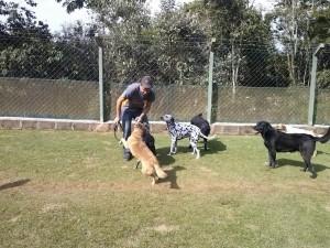 brincadeira dos cães no hotel para cachorro sp