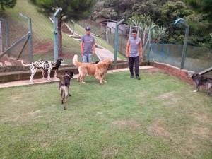 cães brincando no hotel para cachorro sp