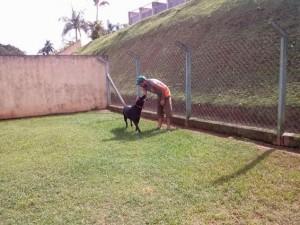 monitor cachorro campo