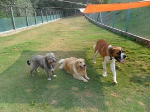 Cães na sombra na doação de cães