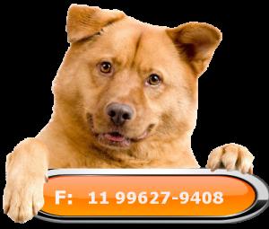 telefone lar temporário para cães