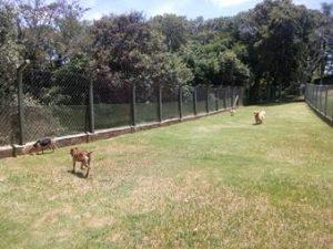 campo para cães no asilo para cachorros