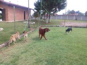 cachorros abrigo para caes