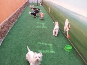 creche cães cachorros brincando quintal