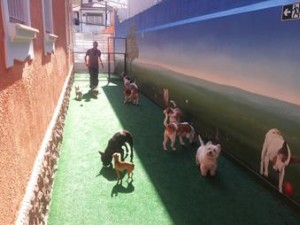 Oito cães brincando creche cães