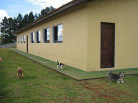 cachorros pequenos hotéis cães