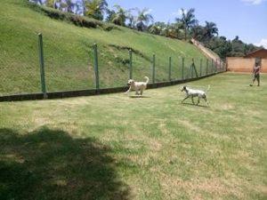campo grande no asilo para cachorros