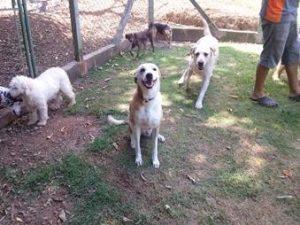 cachorro no campo do asilo para cachorros