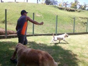 monitor com cachorro no asilo para cachorros