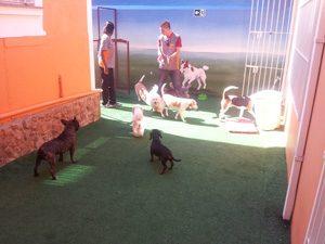 Creche para Cães