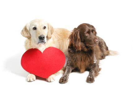 Principais doenças de cães idosos: Aprenda a cuidar e tratar estas doenças