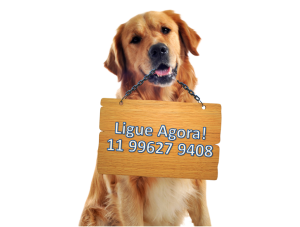telefone do asilo para cachorros