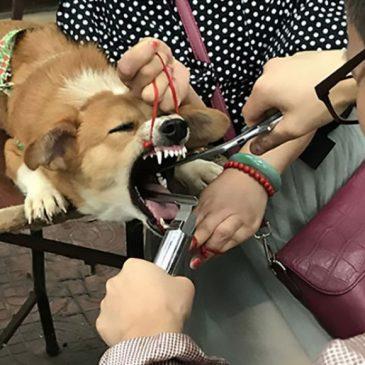 Homem é investigado por remover cordas vocais de cachorro na China