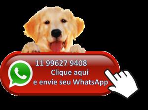whatsapp para hotel e residencia